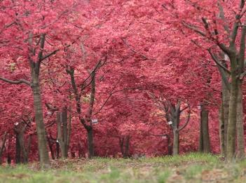 静物摄影培训-枫树林